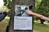 Výstava na stromech5 1600.jpg