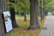 Výstava na stromech7 1600.jpg
